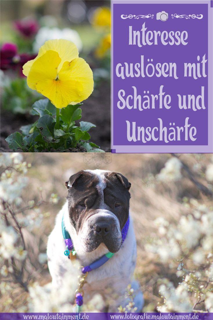 Die Liebe Zur Geringen Scharfe Love For Less Sharpness Fotografie Hund Und Katze Tierfotografie