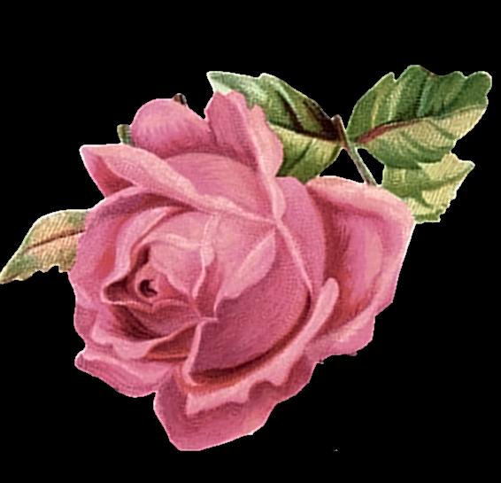 Pink Rose ᐯiᑎtᗩge Tᑌᗷe Vintage Roses Vintage Flowers Pink