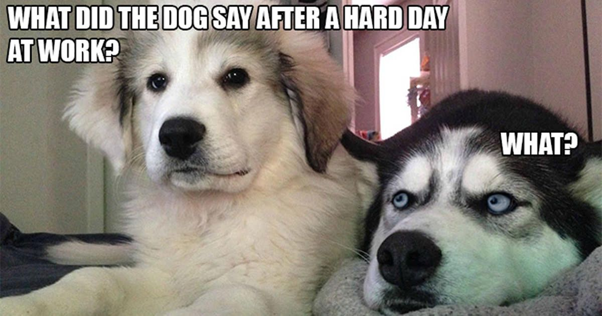 Bad Day Meme Funny : I has a hotdog bad day funny dog pictures dog memes puppy