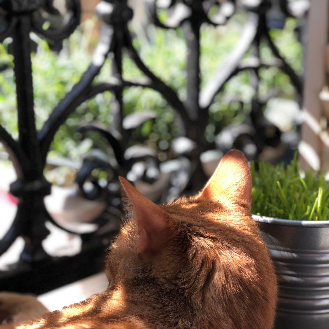 La maison aux fleurs et aux chats#nofilter #flowers #home #paris #parisiancat #parisianhome # ...