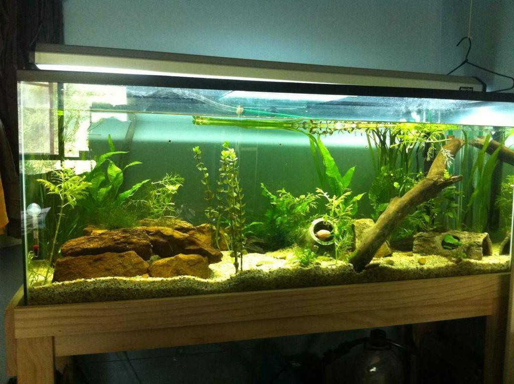 14 splendid diy aquarium furniture ideas to beautify your home rh pinterest com best aquarium overflow design best aquarium design for arowana