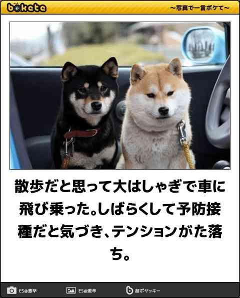 犬のbokete(ボケて) の面白画像 36選 , ペット日和