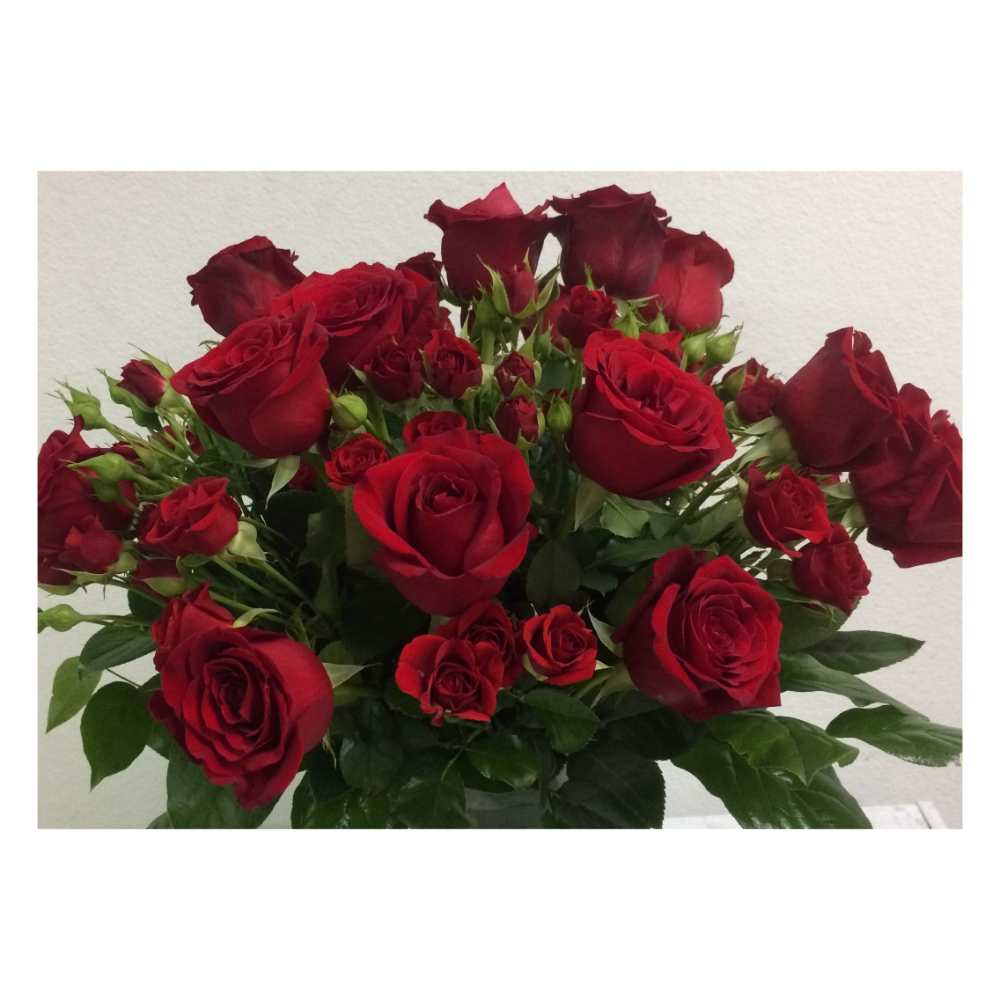 Send Red Roses For Valentine S Day In Rio Rancho In 2020 Roses Valentines Day Flower Delivery Flower Company