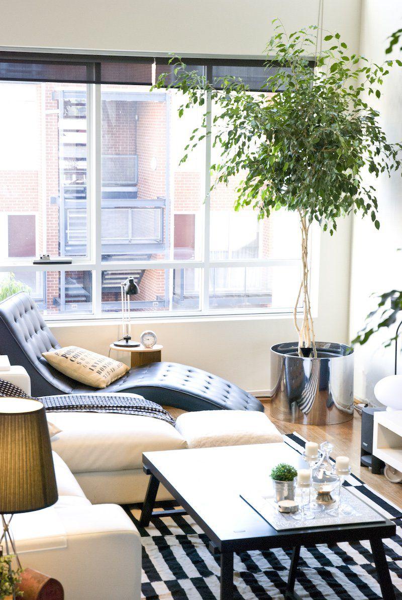 Plantes dépolluantes à entretien facile- purifiez l'air à la maison en décorant | Arbre ...
