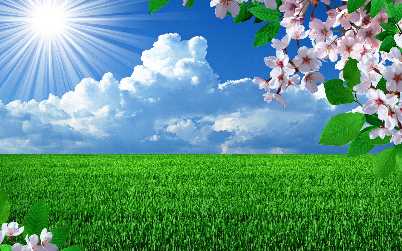 Hot Sunrise Over The Green Grass Spring Nature Revives Hd Beautiful Nature Spring Spring Desktop Wallpaper Spring Landscape