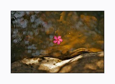 Red Flower in water stream