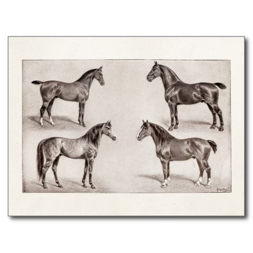 =>quality product          Vintage Horse Arabian Hunter Horses Illustration Post Cards           Vintage Horse Arabian Hunter Horses Illustration Post Cards in each seller & make purchase online for cheap. Choose the best price and best promotion as you thing Secure Checkout you can trust Buy ...Cleck Hot Deals >>> http://www.zazzle.com/vintage_horse_arabian_hunter_horses_illustration_postcard-239636010498274241?rf=238627982471231924&zbar=1&tc=terrest