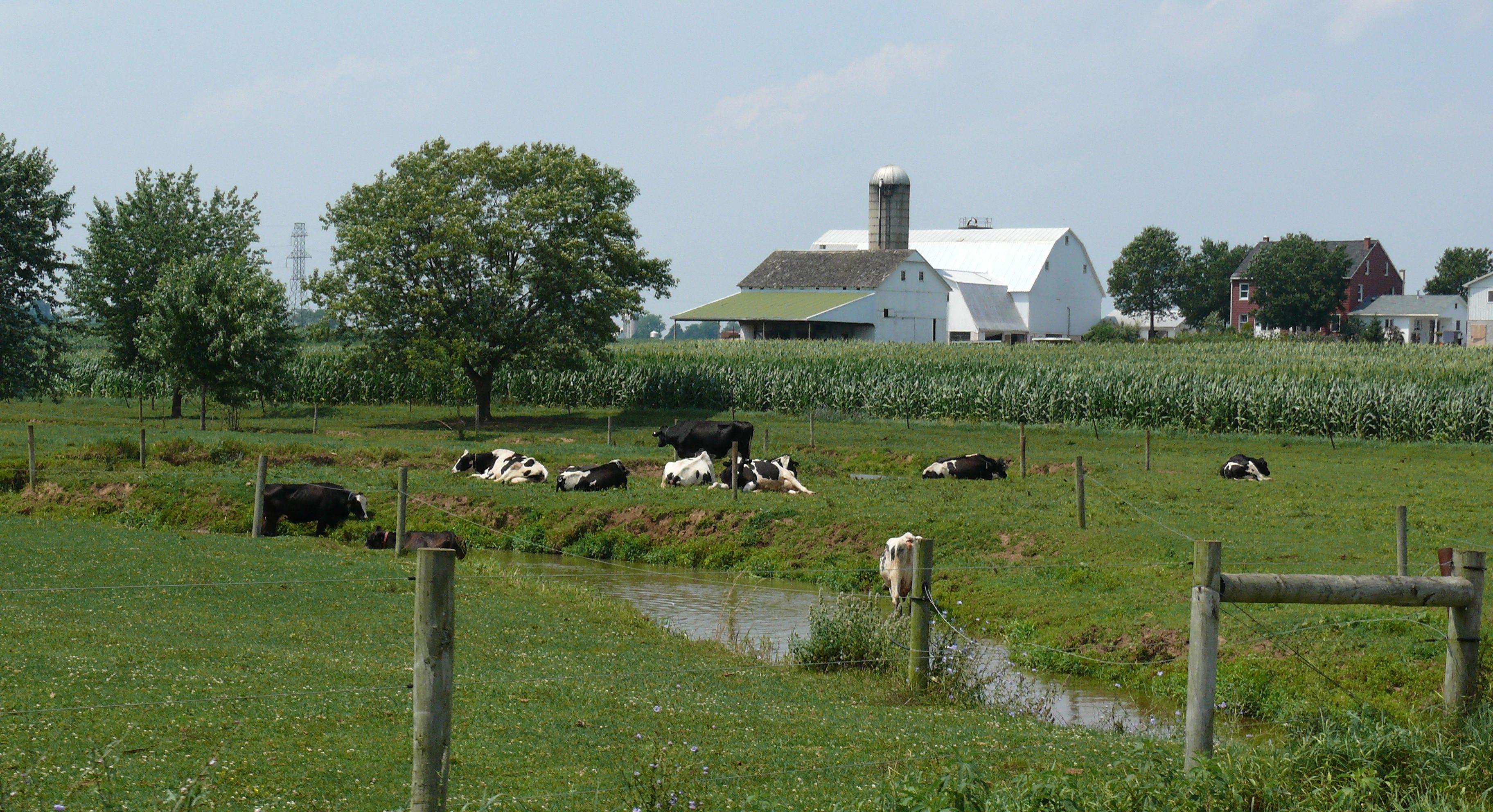 Amish Dairy Farm