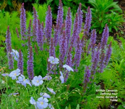 Salvia with Linum perenne; by Freda Cameron at Defining Your Home