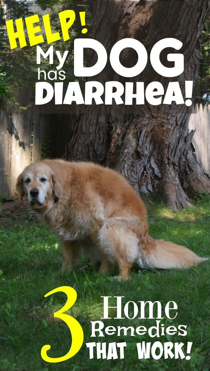 What To Do When Your Dog Has Diarrhea 3 Simple Home Remedies