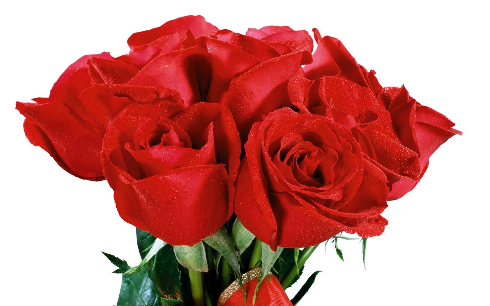 صور ورد جديده ورد صور ورد جوري خلفيات ورد جميلة باقات ورود روعه 2015 اجمل ورد جوري بكل الالوان Flowers Flowers Red Roses Rose