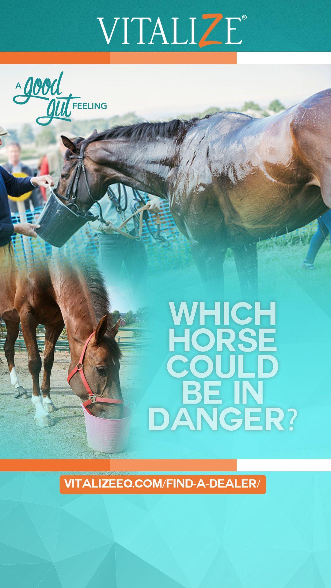 Avoiding Anhidrosis Equine Health Heat stress, Horses