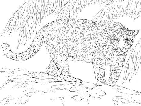 Great Jaguar coloring page | Super Coloring | Coloring Page | Pinterest