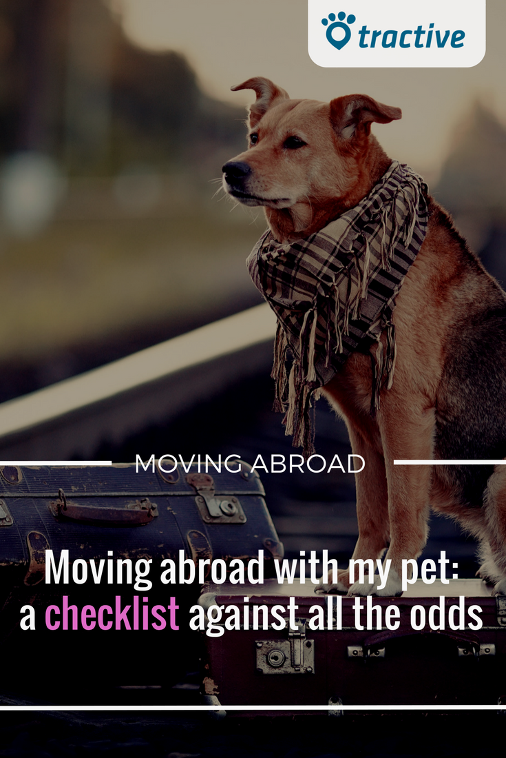 Moving Abroad With A Pet What To Do And When A Checklist To Get Ready Pets Cute Dog Photos Choosing A Dog