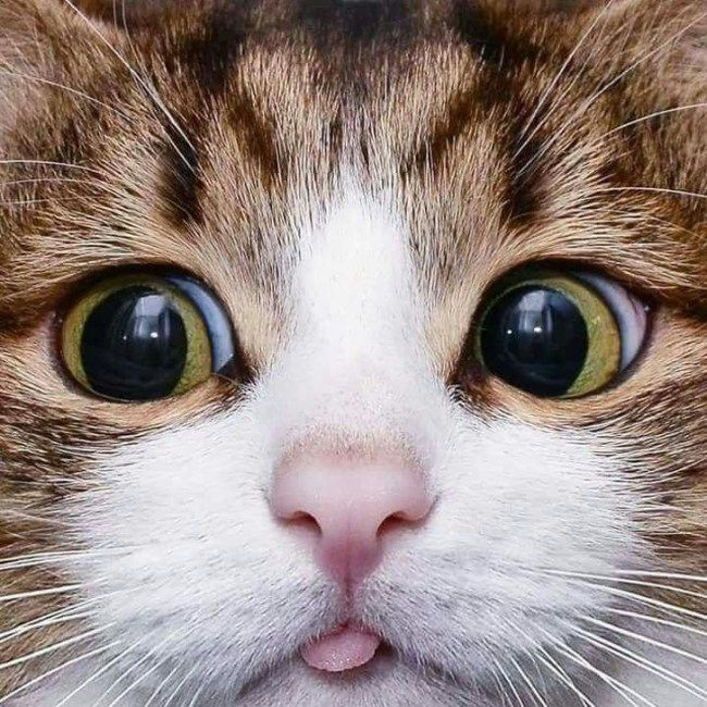 Photo of 25 fotos que prueban que los gatos son los más bellos del mundo Cu