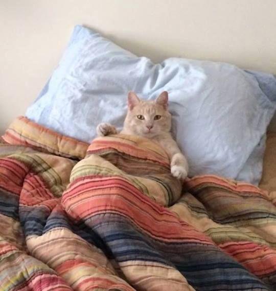 hace fr o hoy no salgo de la cama gato cat animals