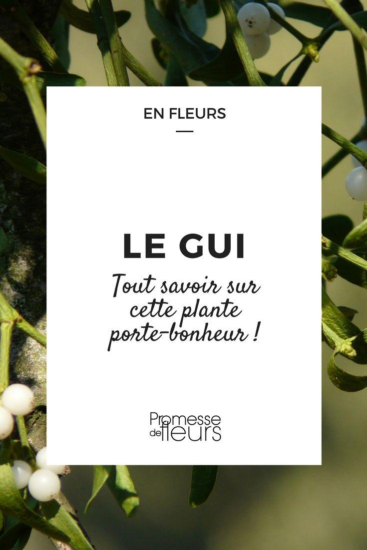 Le gui une bien jolie plante parasite qui porte bonheur jardin plante porte bonheur - Le houx porte bonheur ...