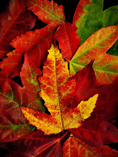 ... the beauty of autumn leaves