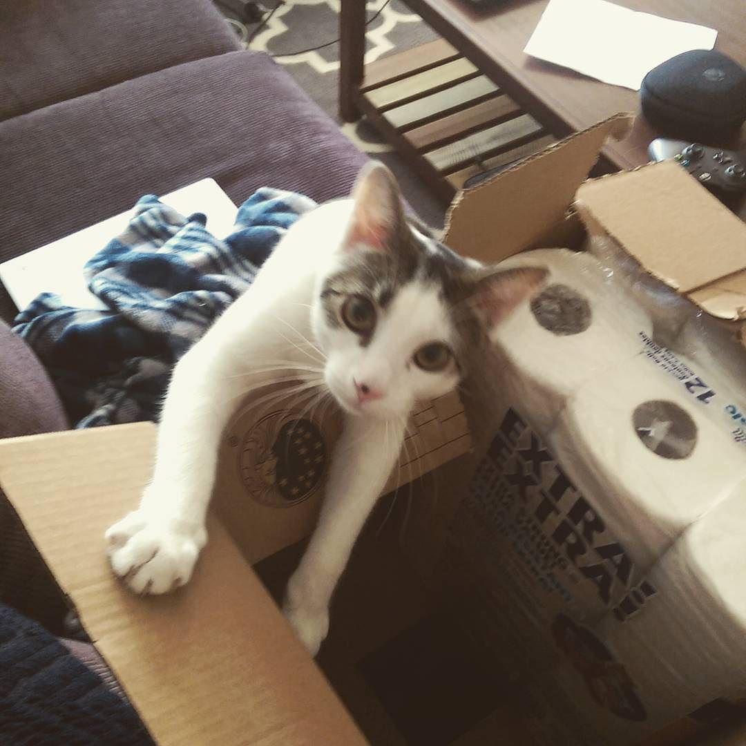 My box!  #cats #catinabox #DaxTheCat #kitten #kittensofinstagram #catsofinstagram #aww #IKeelYou!