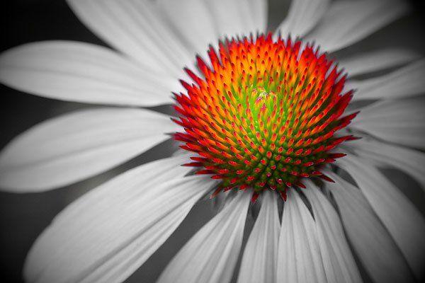 #black & #white ✿ #colorsplash photography