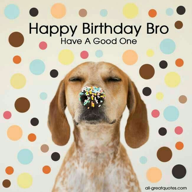 Maddy The Redtick Coonhound Happy Birthday Wishes