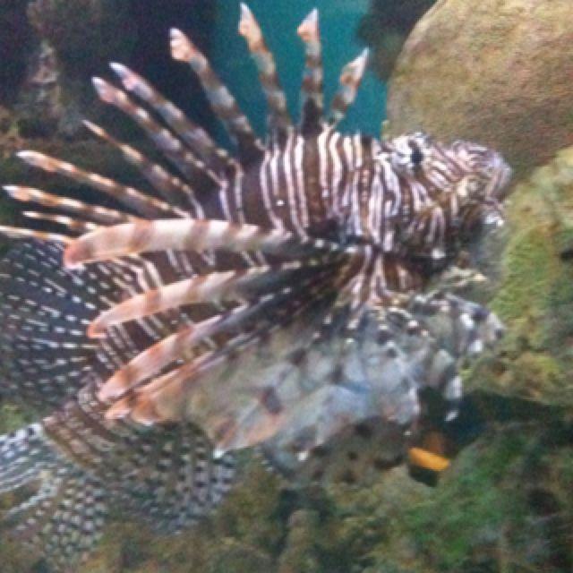 A really cool looking fish. | Fish pet, Fish, Sea creatures