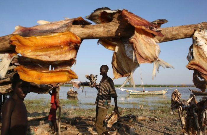 Um homem caminha por peixes de secagem em um acampamento de pescadores na costa ocidental do Lago Turkana, perto de Todonyang, perto da fronteira com o Quênia-Etiópia no norte do Quênia