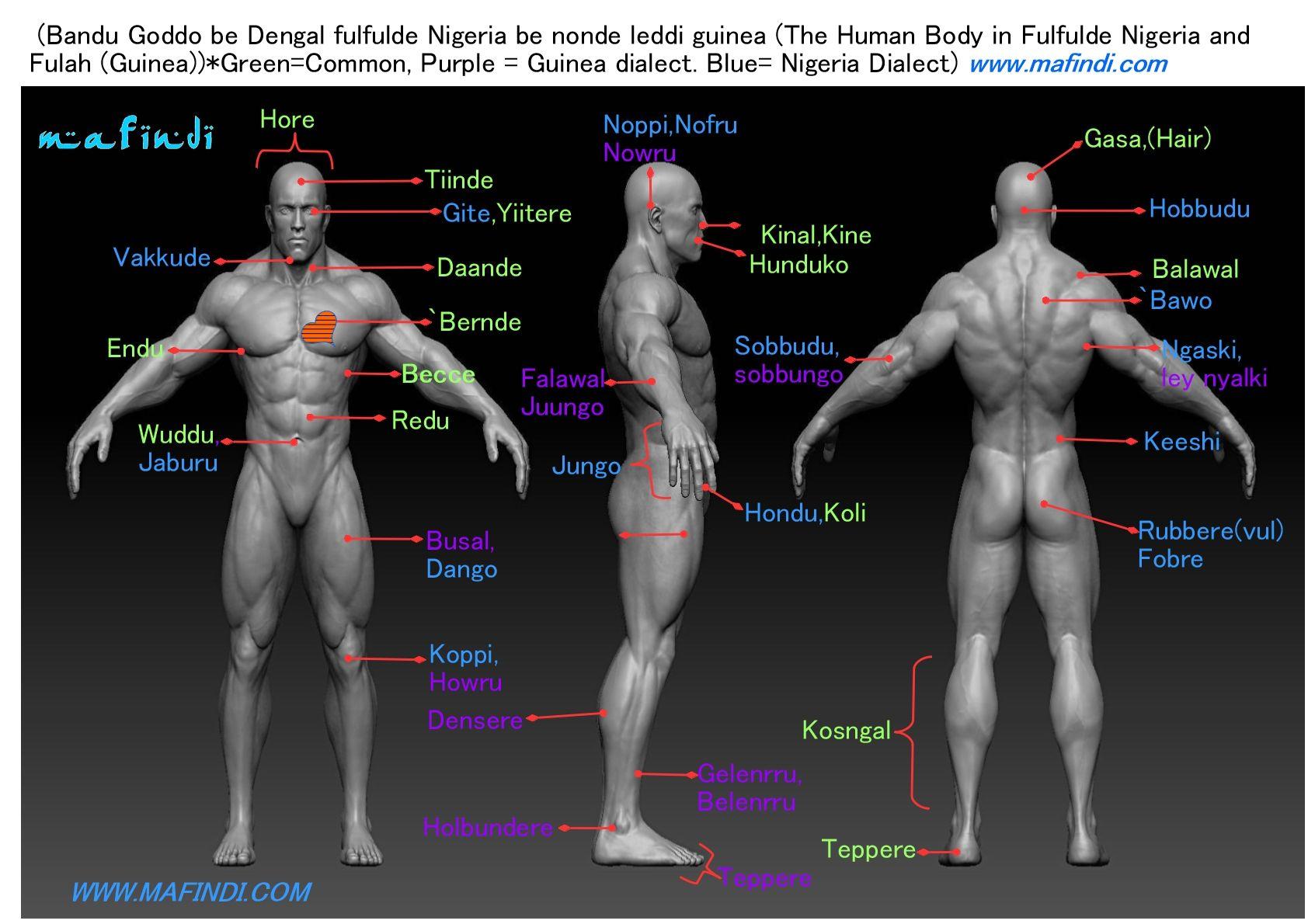 Bandu goddobe fulfulde / fulani / Human Body in Fulfulde | Be ...