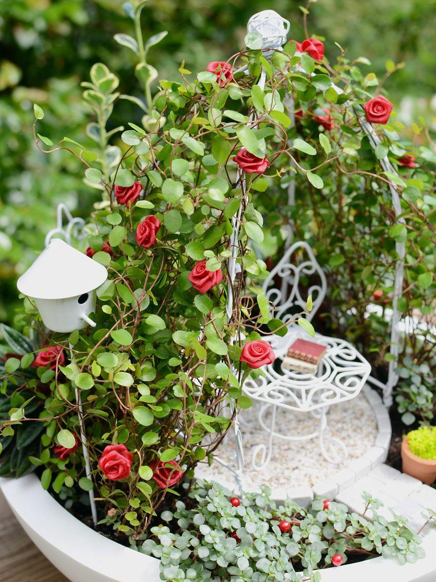 Miniatur-Garten »Rose Red« mit Mini-Garden-Set Romatic von Mason ...