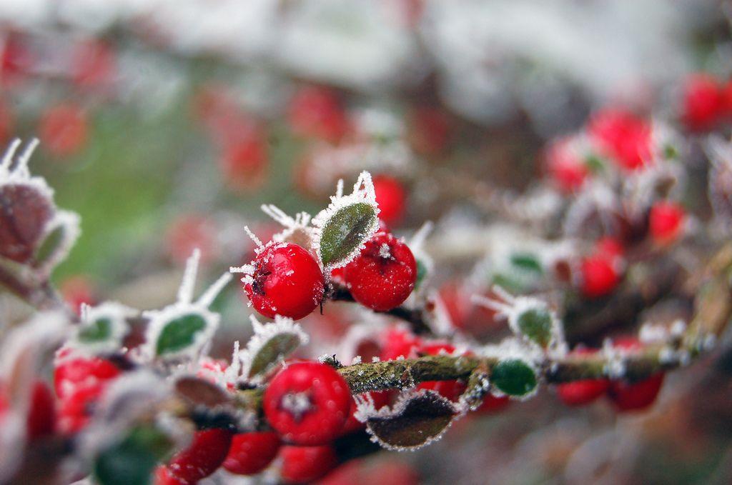 Frosty B - Adele Sweeney Photography