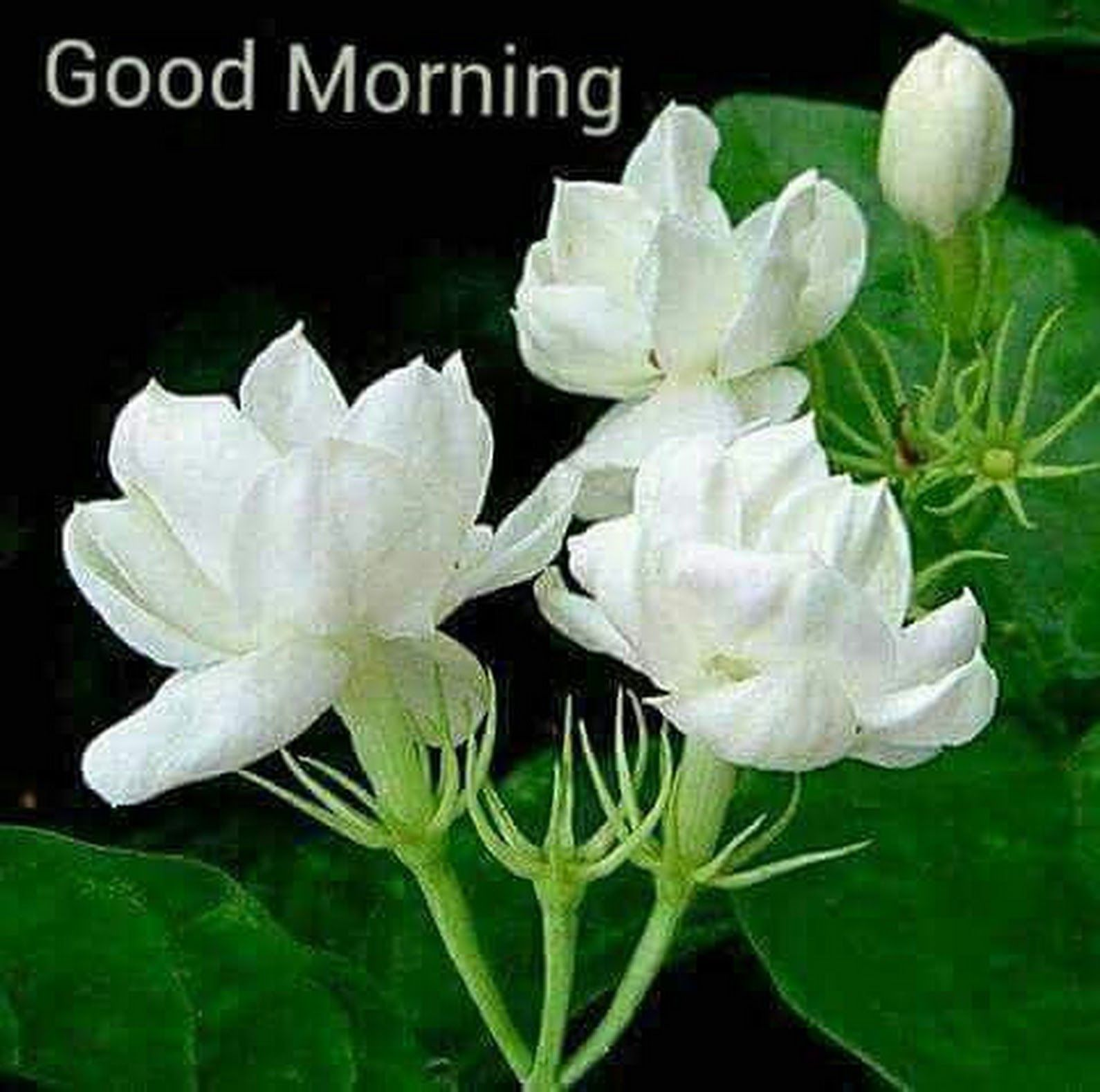 Abhay Kakade Google Good Morning Pinterest Flowers Plants