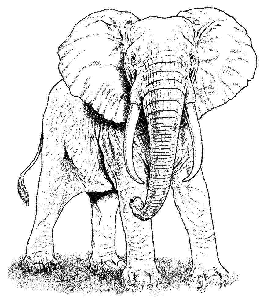 African Elephant Rubber Stamp Elephant Drawing Animal Coloring