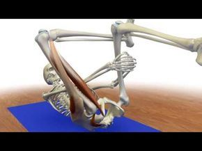 stretching the piriformis protecting the knee in reverse