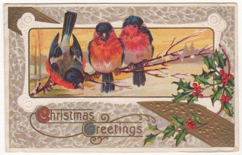 CHRISTMAS GREETINGS WITH THREE BIRDS AND HOLLY Vintage Art Postcard
