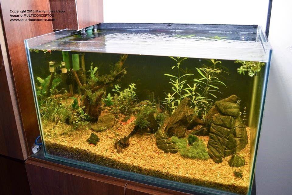 Peces tropicales de agua dulce fotos de los 17 acuarios for Peces de agua dulce para peceras
