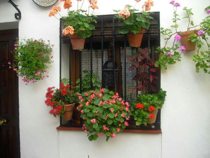 pequeña ventana con reja y macetas. córdoba. | rejas