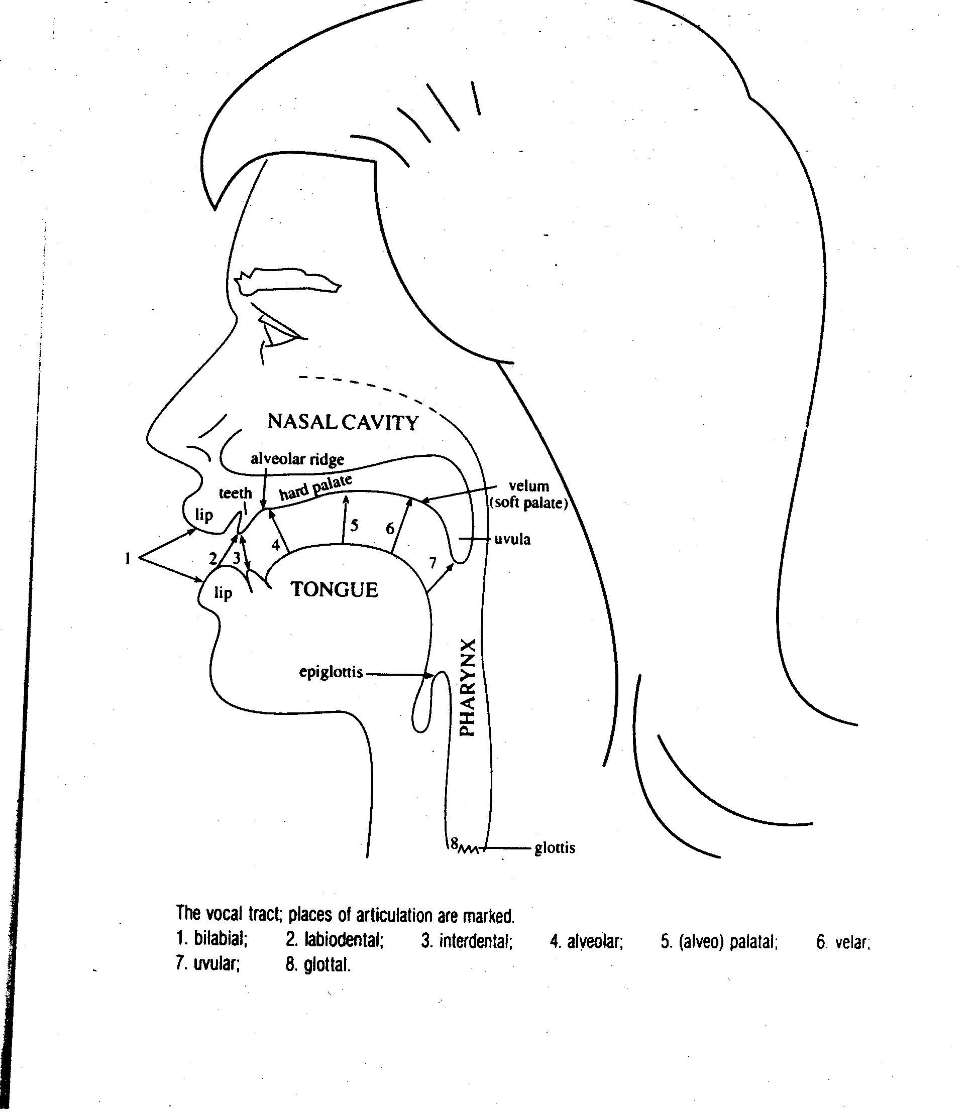 Phoneme Placement