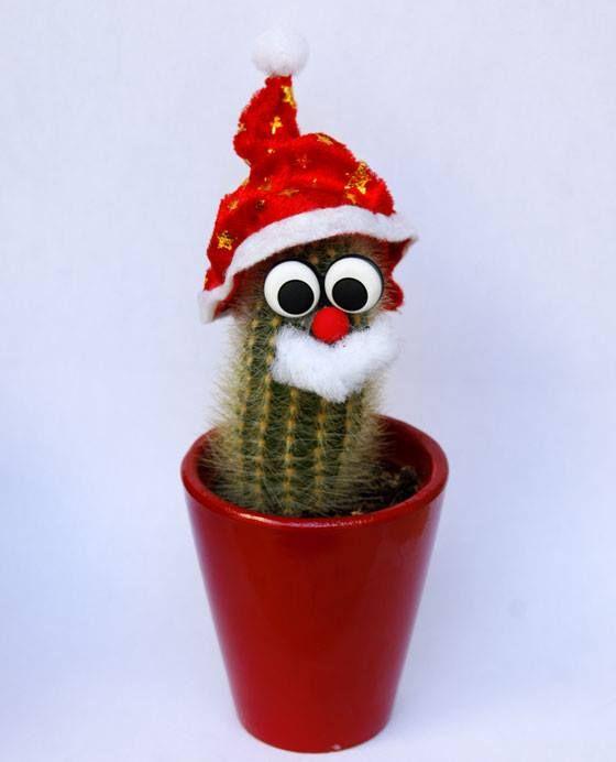 Per un Natale pungente...