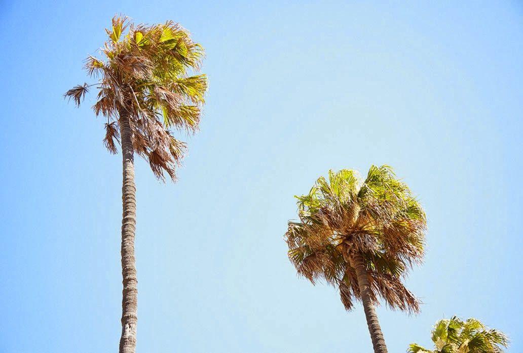 P A R A D I S O; nothing makes me calmer than these trees