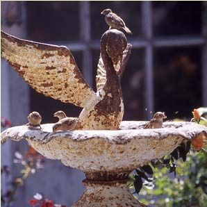 lovely #rusty #birdbath attracts all kinds of birds who only want to drink from a vintage piece at my cottage