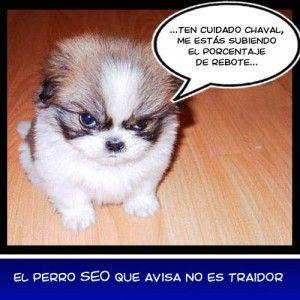 Humor Perro Seo Que Avisa Perro Bravo Fotos Divertidas De Animales Imagenes De Animales Tiernos