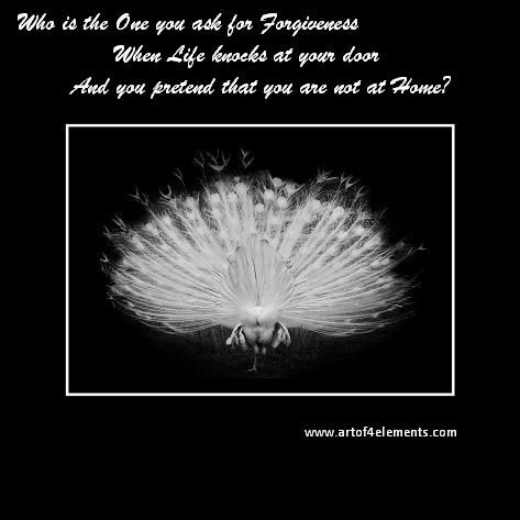 who is the one you ask for forgiveness Poem by Nuit