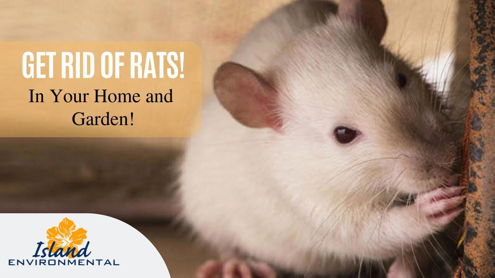Need To Get Rid Of Rats In Your Home And Garden Then Walk Into Island Environmental Pest Control Rat Infestat Getting Rid Of Rats Pest Control Supplies Pests