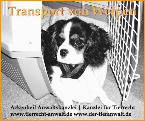 Transport   Einfuhr von Welpen: Tollwut-Impfpflicht für Welpen, die nach Deutschland einreisen   Welpentransport, Impfpflicht, Einreisebestimmung   Tieranwalt