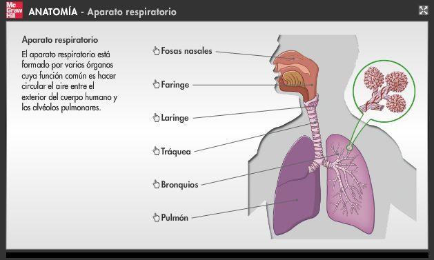 Infografías de anatomía: Infografía sobre el aparato locomotor ...
