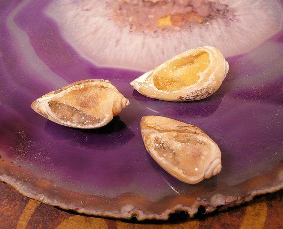 3pc Small Crystallized Fossil Sea Shells w/ by ShiniesAhoy on Etsy, $36.00