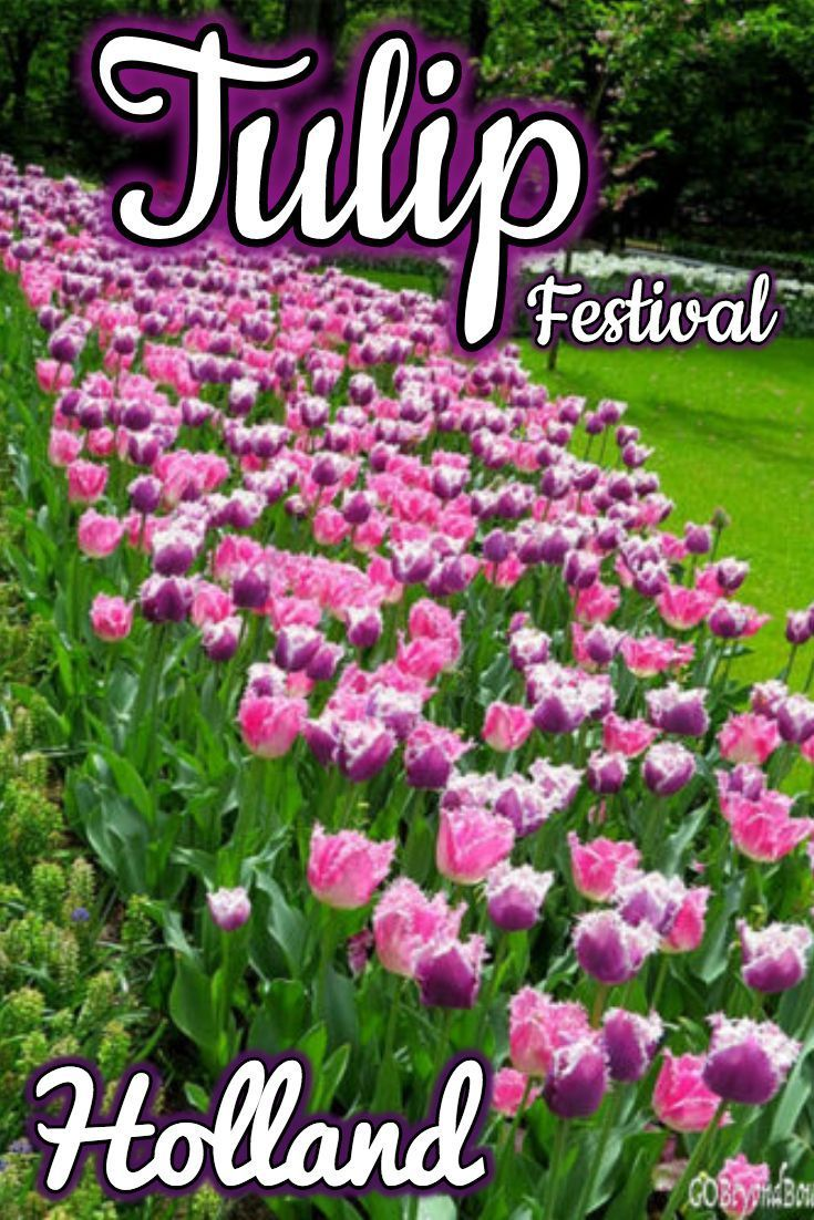 Tulip Festival at the Garden of Europe