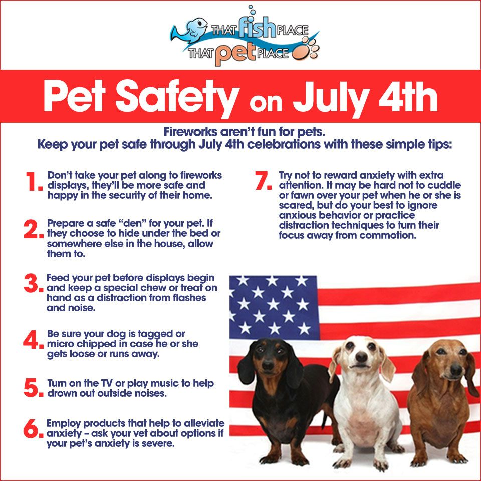 Pet Safety on July 4th Fireworks aren't fun for pets. Keep