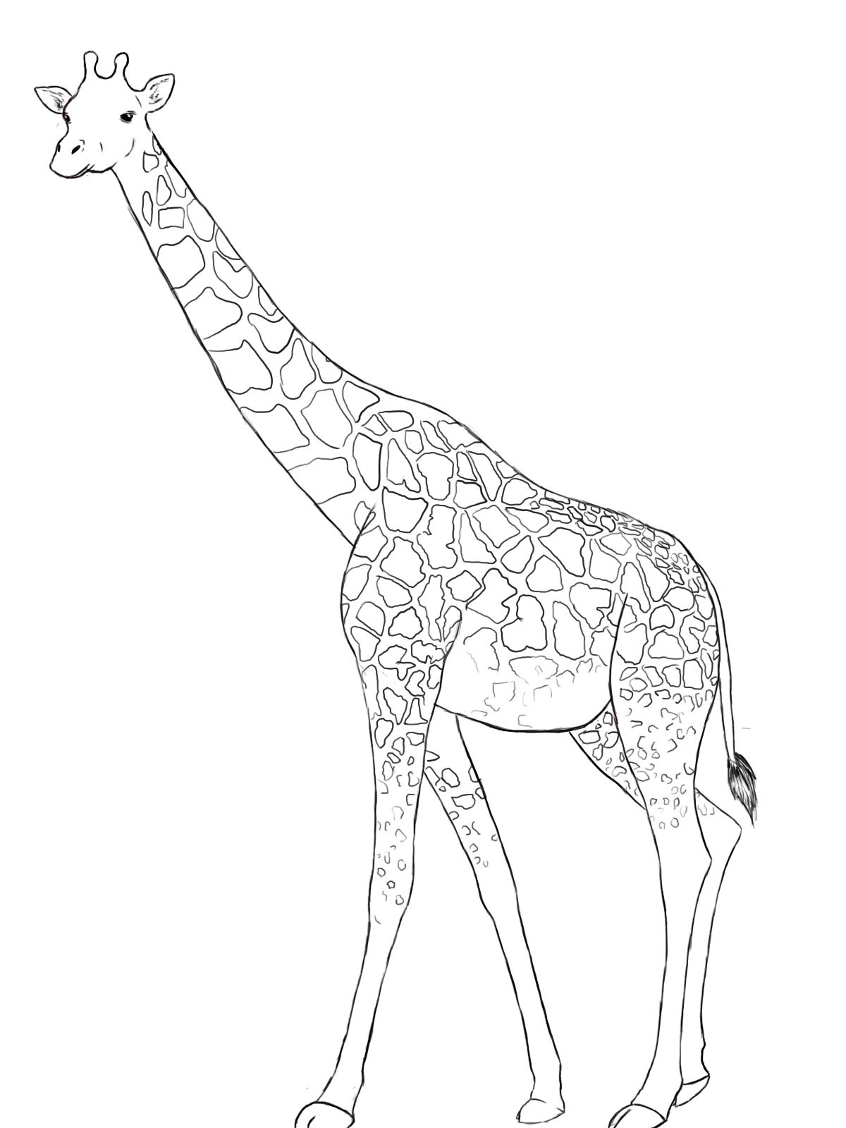 Line Art Giraffe : How to draw a giraffe cartoon and learning