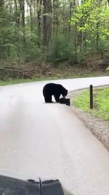 Beautiful Black bear with cute babies. Please follow Animals Board for more videos #adorablepuppyvideos